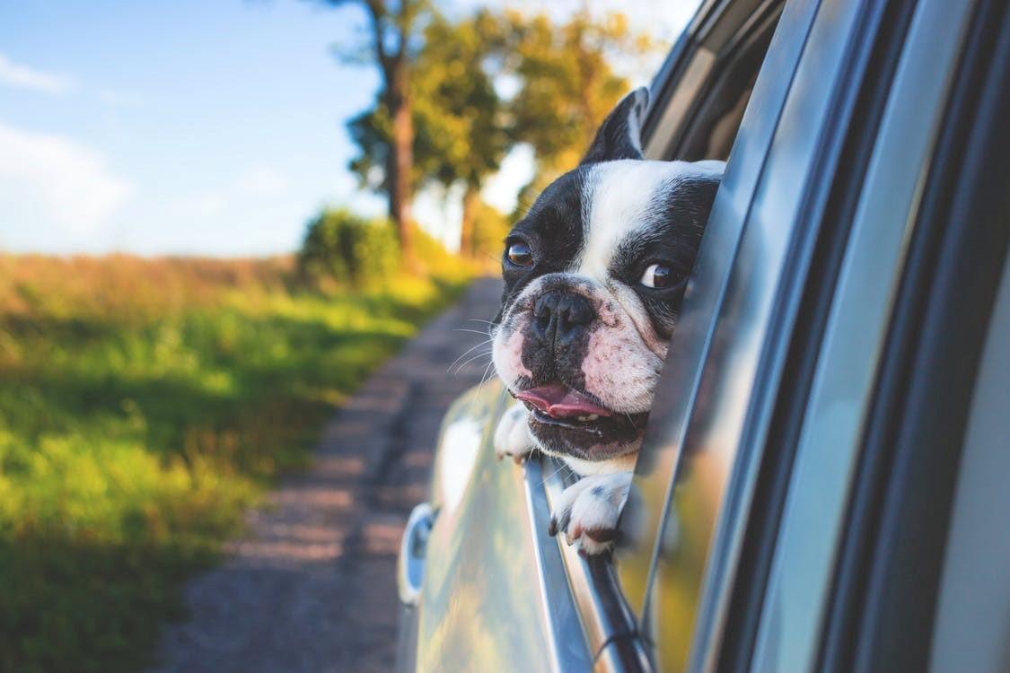 Kaip saugiai pervežti gyvūną?