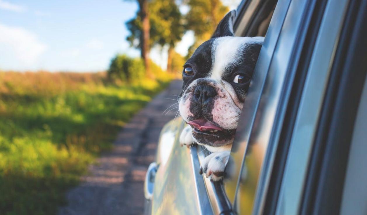 Как безопасно перевозить  животное?